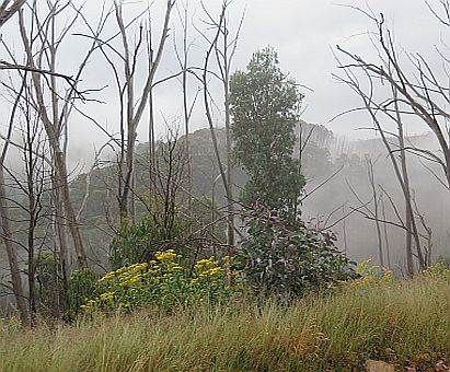 morning mist on Basalt Knob Track, Vic High Country